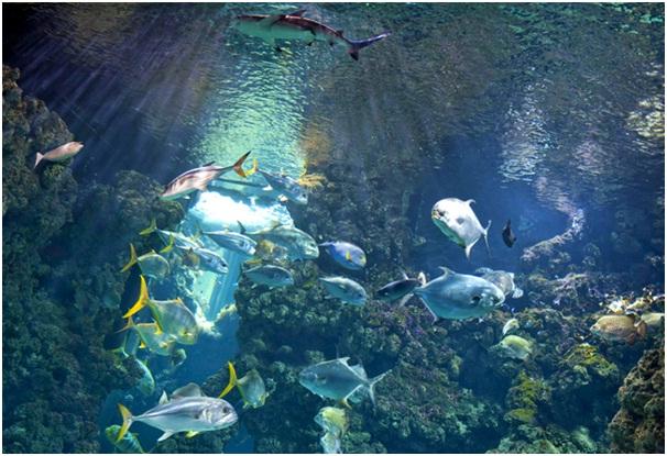 Oceanographic-Museum-in-Monte-Carlo