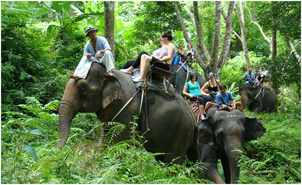 Elephant-Trekking-in-Krabi