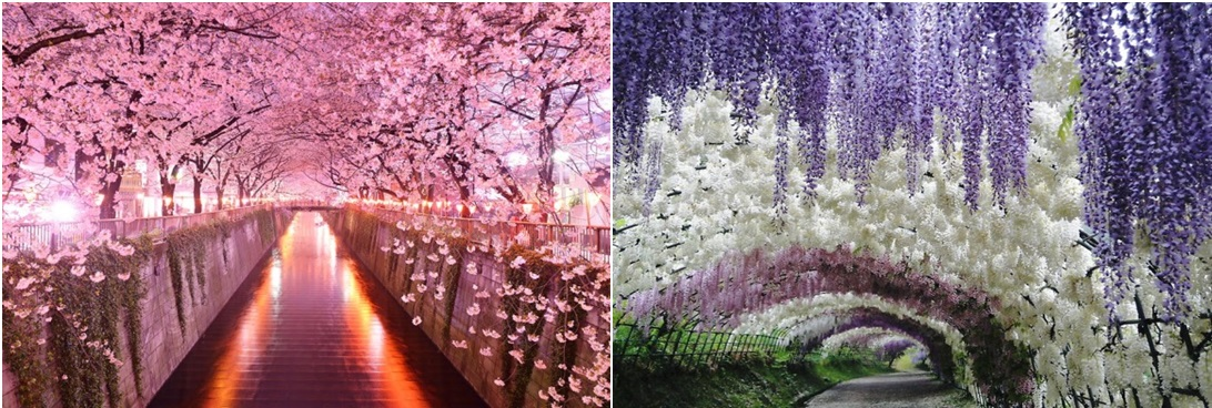 Japan-Magical-Tree-Tunnels