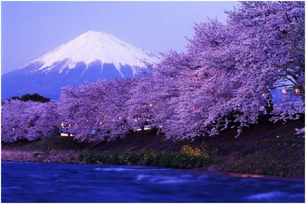 Beauty-of-Japan-in-Cherry-Blossom