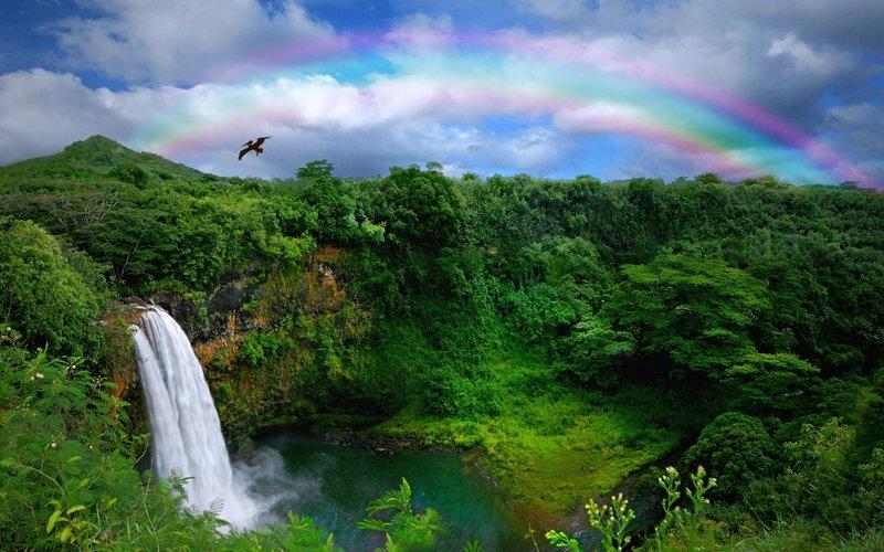 rsz_shutterstock_19328719-wailua_falls_with_rainbow_and_bird_0