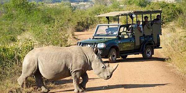 pilanesburg-game-safari-1