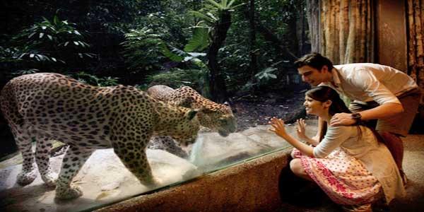 singapore-zoo-and-night-safari