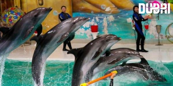 dubai-dolphinarium