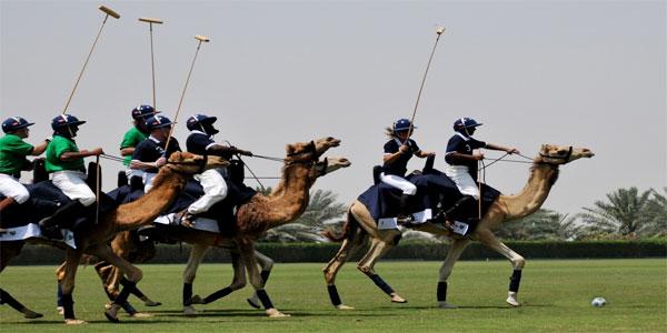 camel-p